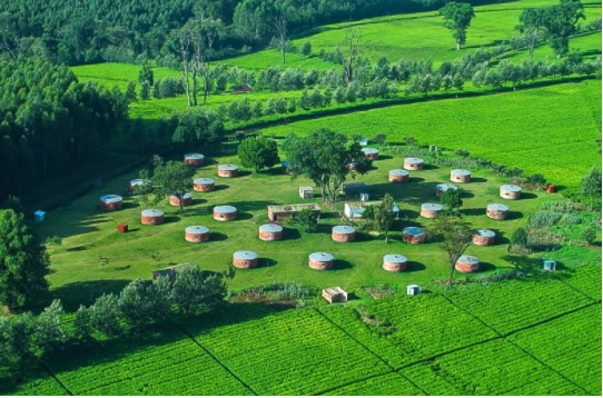 Tea Estates in Kericho County