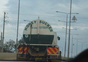 Honey Sucker