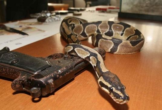 ndrangheta Mafia