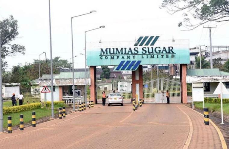 KCB sacks all Mumias Sugar Employees