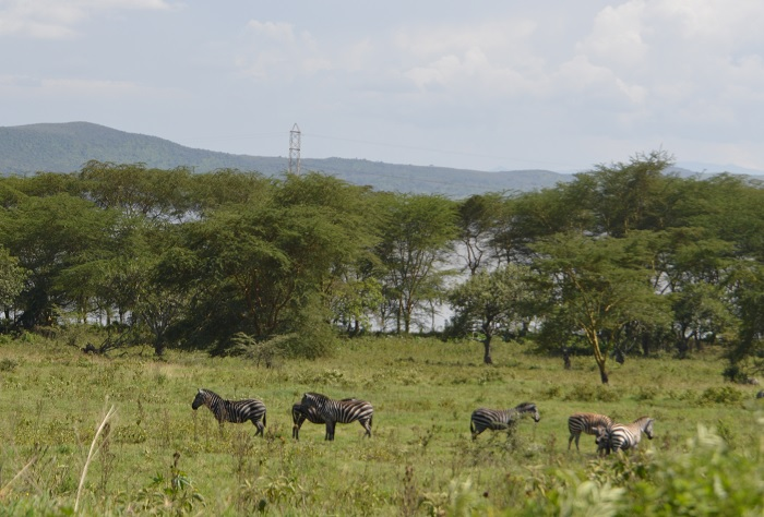 Devolution Committee recommends Nakuru to be elevated to City Status