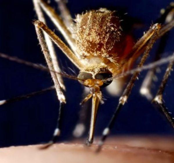 160 cases of dengue fever reported in Ethiopia's Somali Region