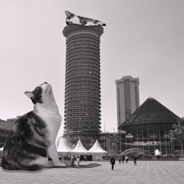 KICC features on cats of brutalism