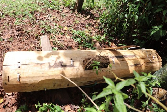 Kenya's Livestock Bill 2021 criminalizes freestyle beekeeping